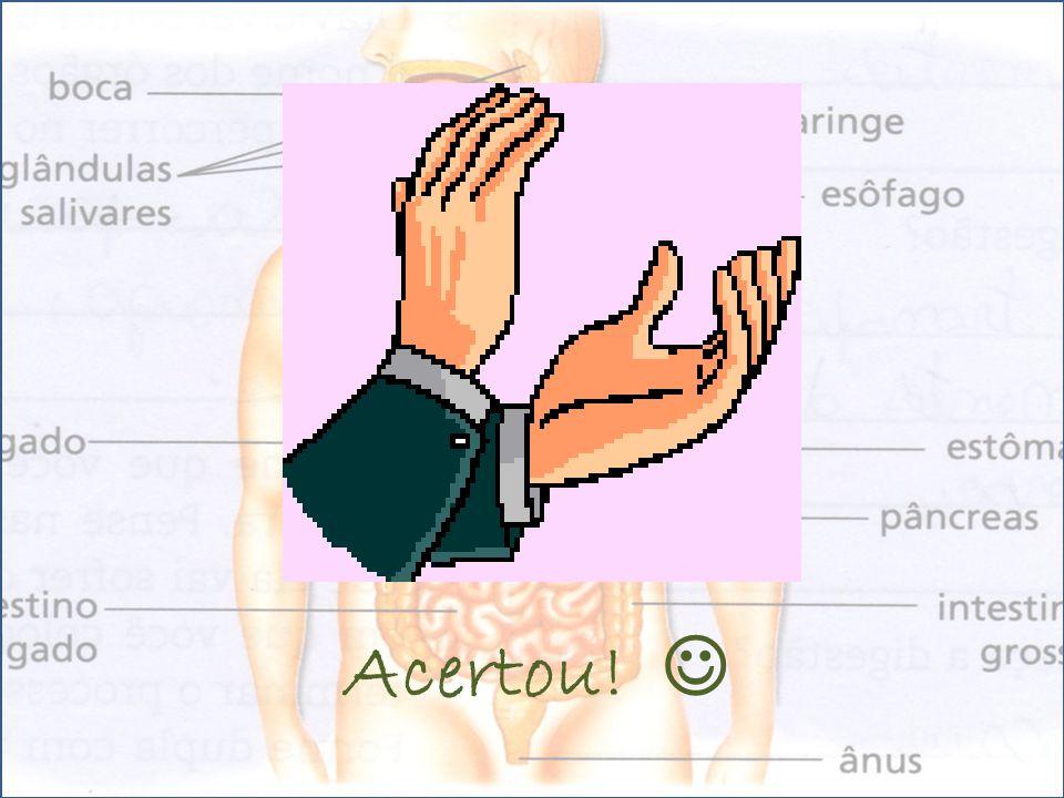 Na digestão participam os sistemas: Digestivo Circulatório Respiratório Excretor