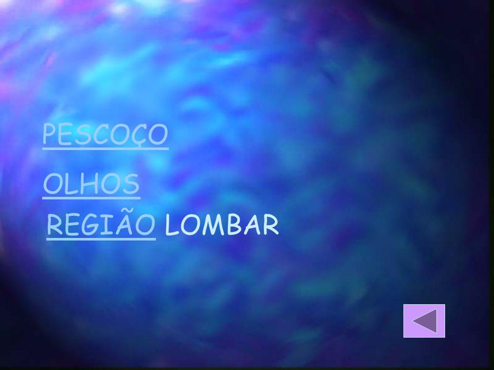 PESCOÇO OLHOS REGIÃOREGIÃO LOMBAR
