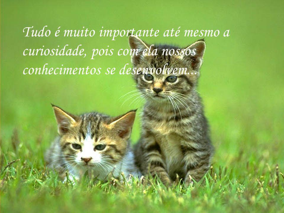 http://www.wmnett.com.br Descobrir, aprender, conhecer...