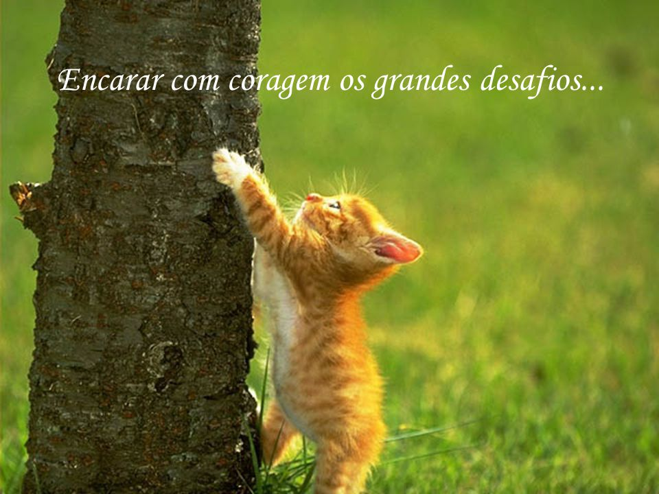 http://www.wmnett.com.br Enfrentar todos os riscos que a vida nos prega...