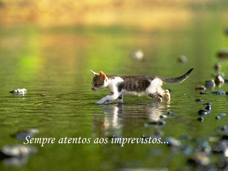 http://www.wmnett.com.br Com muita calma e prudência...