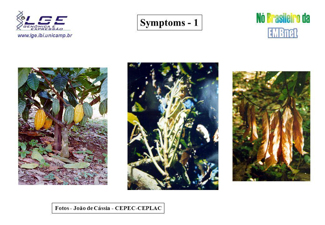 www.lge.ibi.unicamp.br Symptoms - 1 Fotos - João de Cássia - CEPEC-CEPLAC