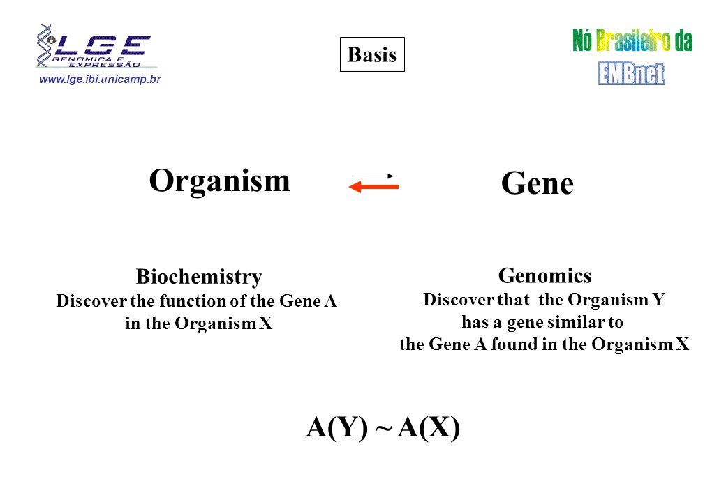 www.lge.ibi.unicamp.br Basis Organism Gene Biochemistry Discover the function of the Gene A in the Organism X Genomics Discover that the Organism Y has a gene similar to the Gene A found in the Organism X A(Y) ~ A(X)