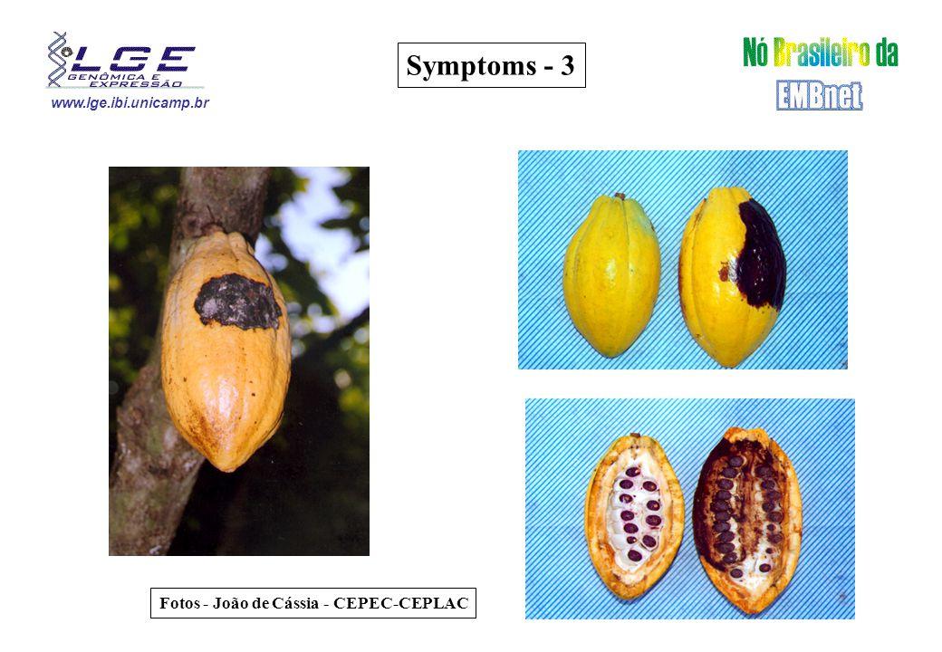 www.lge.ibi.unicamp.br Fotos - João de Cássia - CEPEC-CEPLAC Symptoms - 3