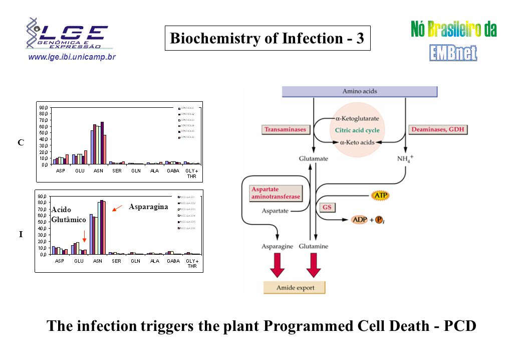 www.lge.ibi.unicamp.br Biochemistry of Infection - 3 C I Acido Glutâmico Asparagina The infection triggers the plant Programmed Cell Death - PCD
