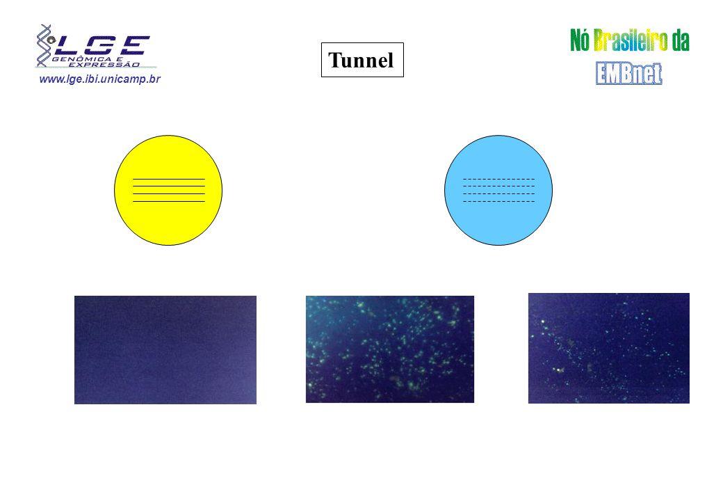 www.lge.ibi.unicamp.br Tunnel