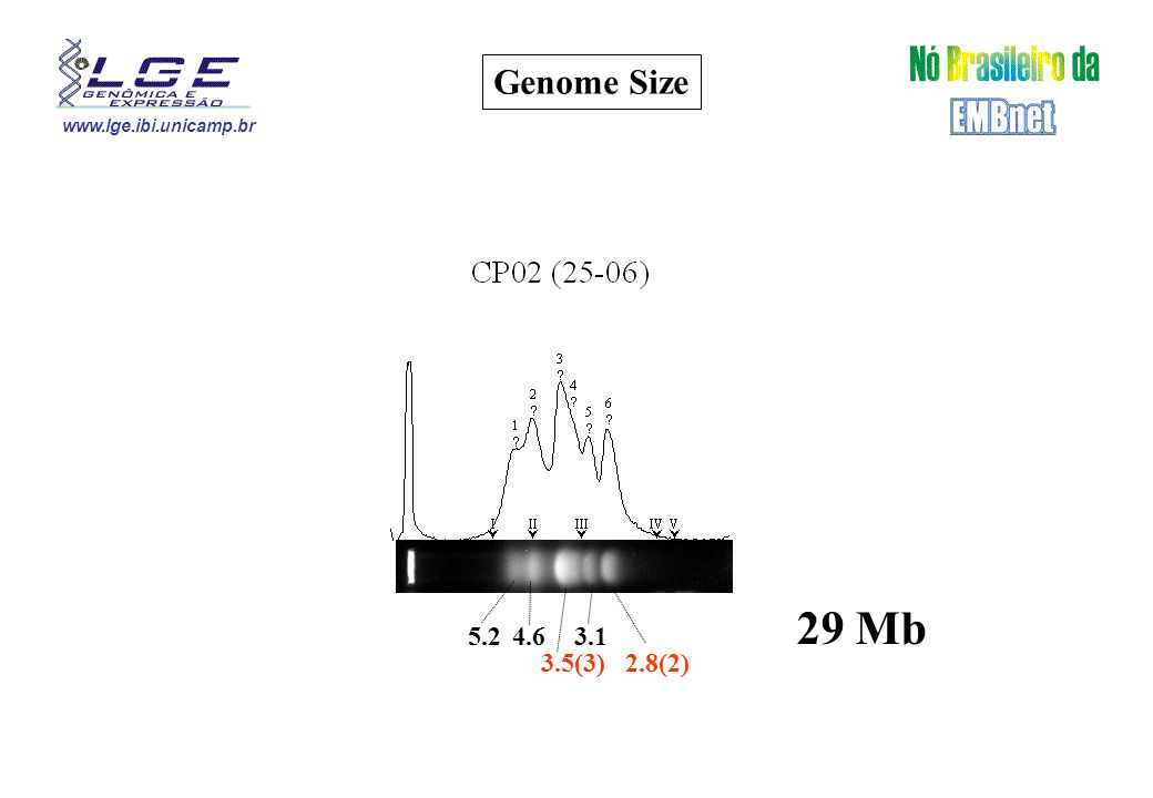 www.lge.ibi.unicamp.br 3.1 2.8(2) 4.65.2 3.5(3) 29 Mb Genome Size