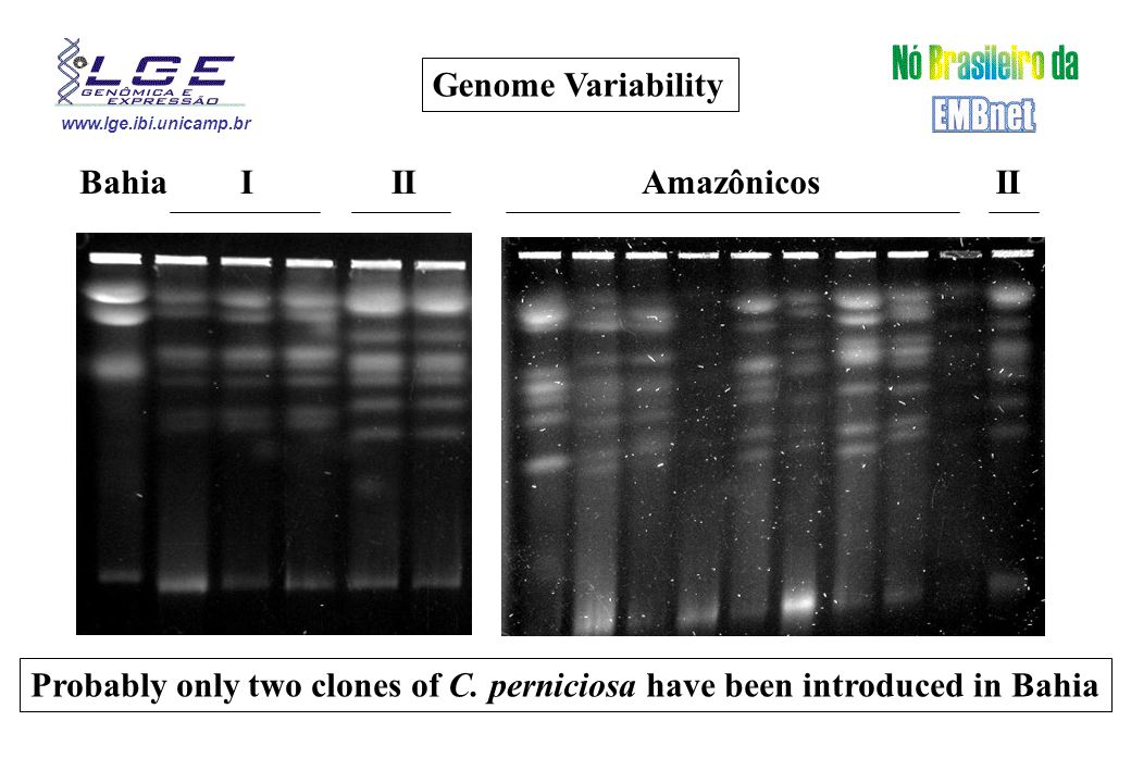 www.lge.ibi.unicamp.br Genome Variability BahiaIII Amazônicos Probably only two clones of C. perniciosa have been introduced in Bahia