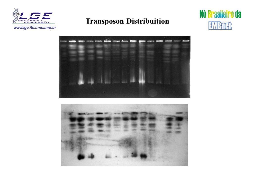 www.lge.ibi.unicamp.br Variability Dynamics Homobasidiomycete Sexual Phase ??.