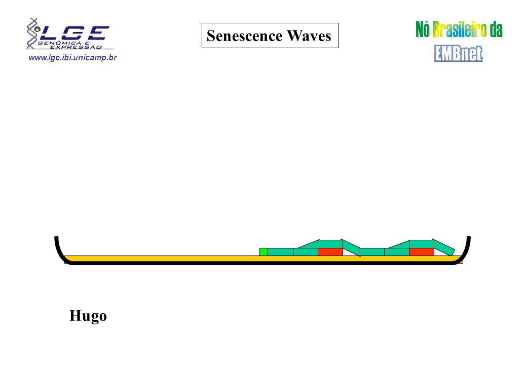www.lge.ibi.unicamp.br Senescence Waves Hugo