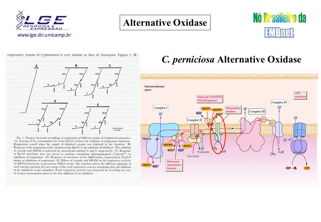 www.lge.ibi.unicamp.br Alternative Oxidase C. perniciosa Alternative Oxidase