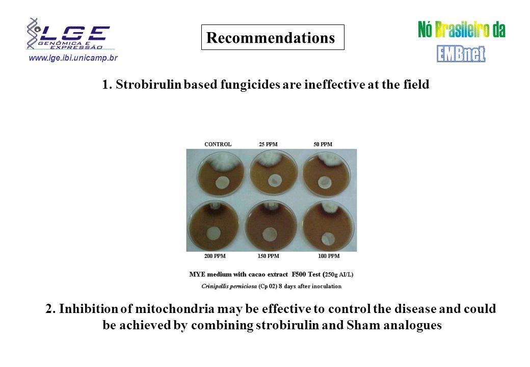 www.lge.ibi.unicamp.br Acidocalcisome ??? Nuclei ???