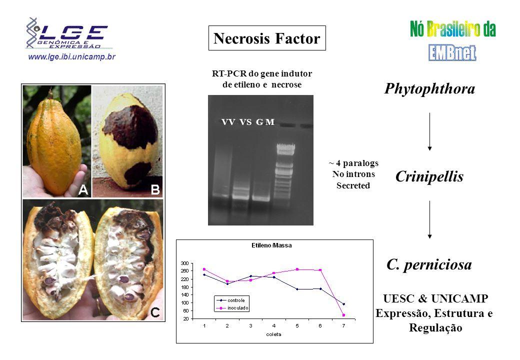www.lge.ibi.unicamp.br Necrosis Factor Phytophthora Crinipellis C.