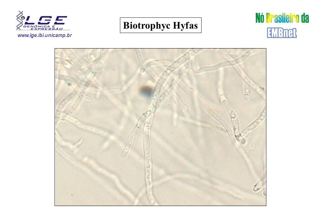 www.lge.ibi.unicamp.br Biotrophyc Hyfas