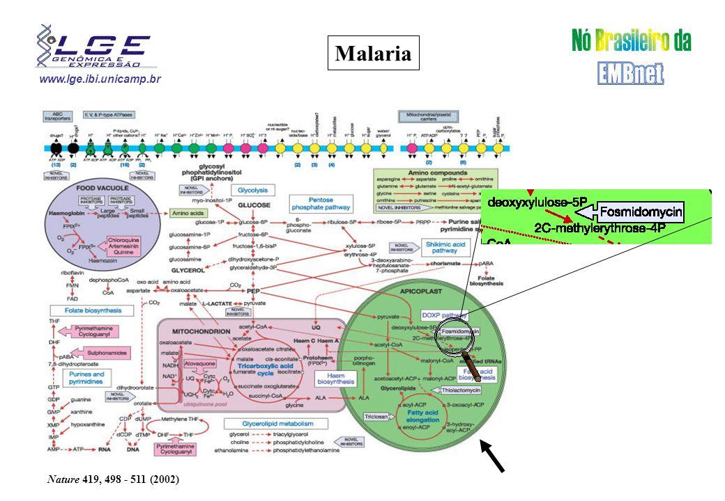 www.lge.ibi.unicamp.br Malaria Nature 419, 498 - 511 (2002)
