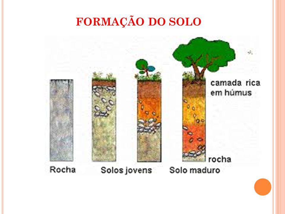 As técnicas agroecológicas são um conjunto de medidas que visam promover a recuperação e conservação do solo.