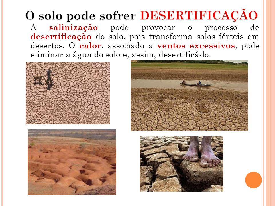 A salinização pode provocar o processo de desertificação do solo, pois transforma solos férteis em desertos. O calor, associado a ventos excessivos, p