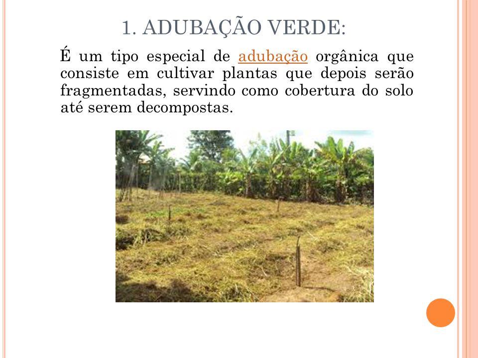 1. ADUBAÇÃO VERDE: É um tipo especial de adubação orgânica que consiste em cultivar plantas que depois serão fragmentadas, servindo como cobertura do