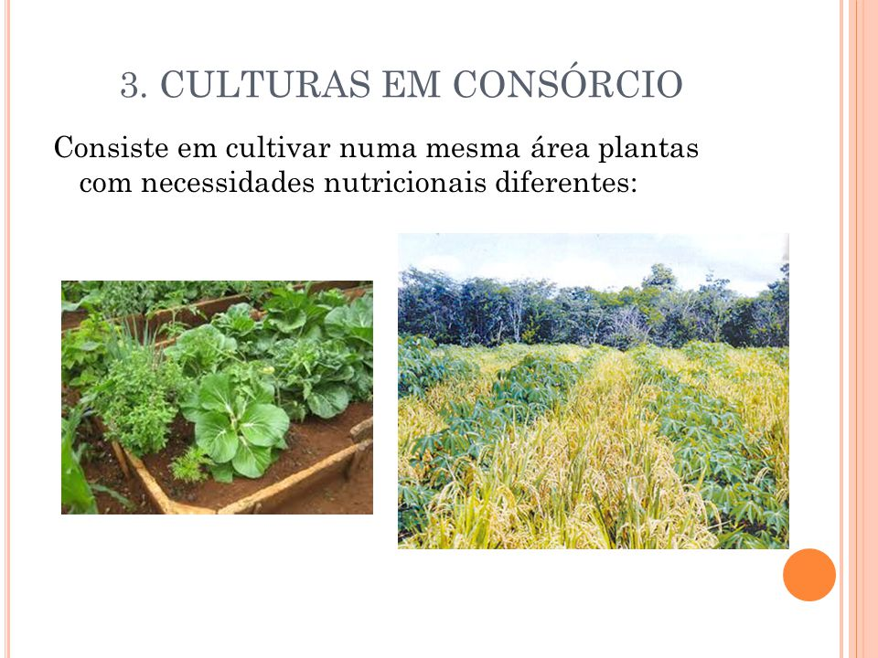 3. CULTURAS EM CONSÓRCIO Consiste em cultivar numa mesma área plantas com necessidades nutricionais diferentes:
