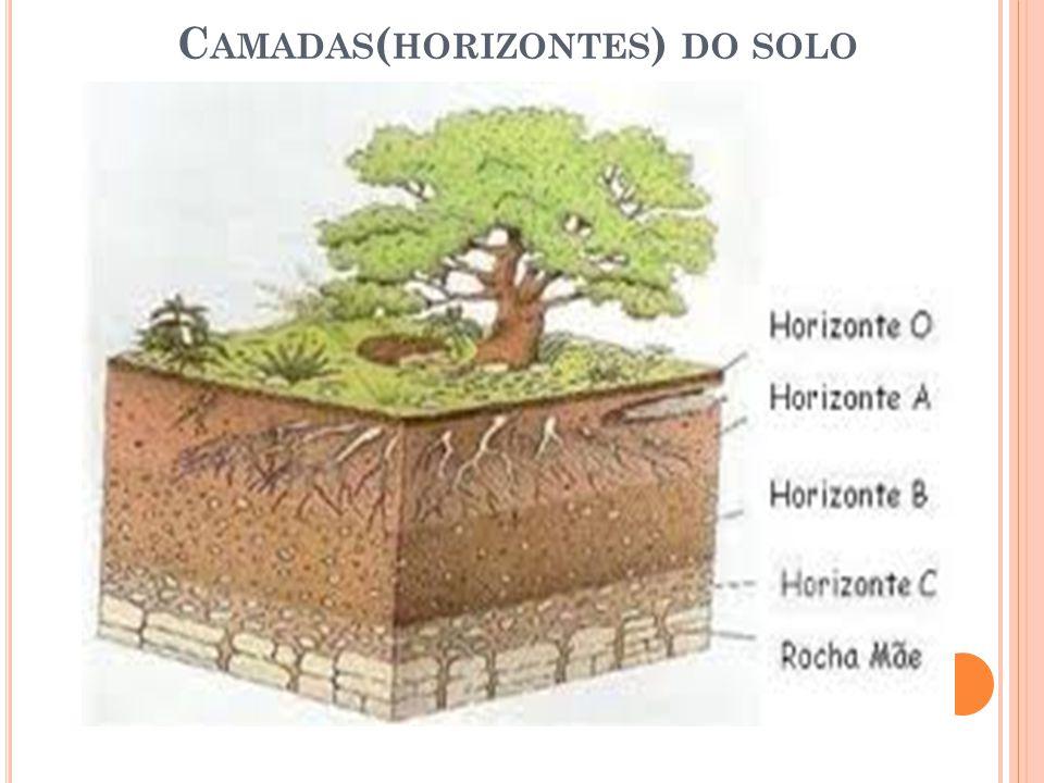 C AMADAS ( HORIZONTES ) DO SOLO