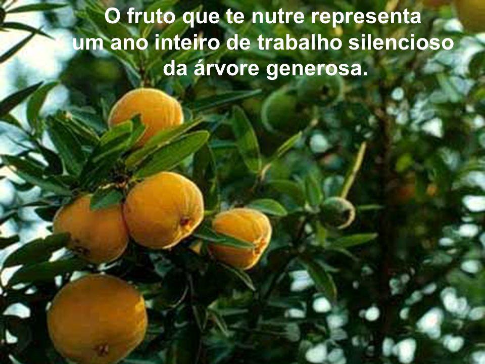 O fruto que te nutre representa um ano inteiro de trabalho silencioso da árvore generosa.