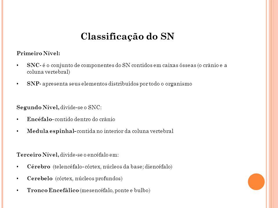 Classificação do SN Primeiro Nível: SNC - é o conjunto de componentes do SN contidos em caixas ósseas (o crânio e a coluna vertebral) SNP - apresenta
