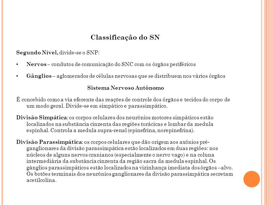 Classificação do SN Segundo Nível, divide-se o SNP: Nervos – condutos de comunicação do SNC com os órgãos periféricos Gânglios – aglomerados de célula