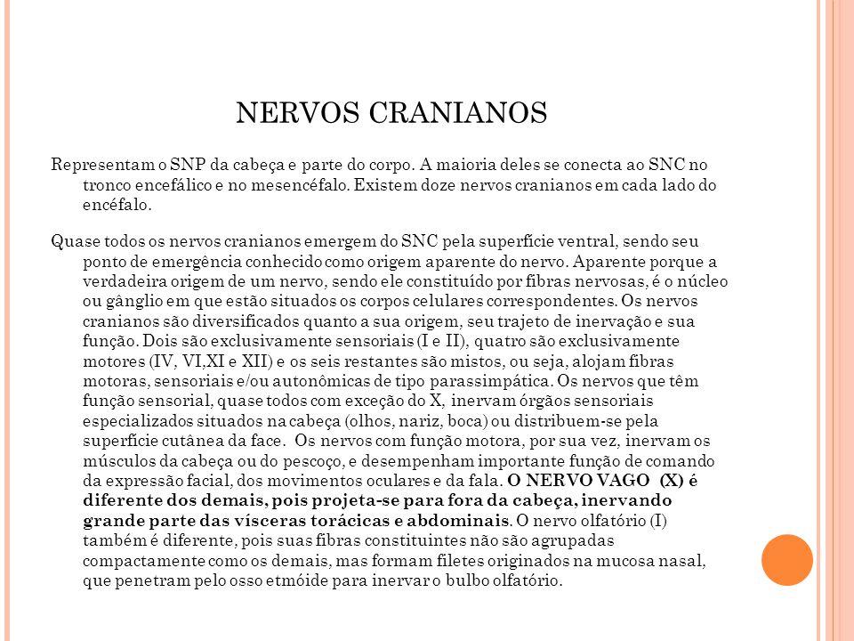 NERVOS CRANIANOS E RESPECTIVA FUNÇÃO OS NERVOS CRANIANOS CONSTITUEM DOZE PARES DE NERVOS QUE EMERGEM DA BASE DO CRANIO (I e II) OU DO TC (III A XII) NOTA: ADAPTAÇÃO DE TEIXEIRA (2010) e LENT (2008) NERVO CRANIANO TipoInervaçãopFUNÇÃOTESTE I OLFATORIO sensitivoMucosa olfatória+bulbo olfatório OLFAÇÃO QUESTIONAR ALTERAÇÃO DO OLFATO II ÓPTICO sensitivoretina- Msencéfalo+dienceéalo VISUAL TESTE ACUIDADE VISUAL E CAMPO VISUAL POR CONFRONTAÇÃO III OCULOMOTOR Misto (S+M) parassimpática Trato encefálico- músc..