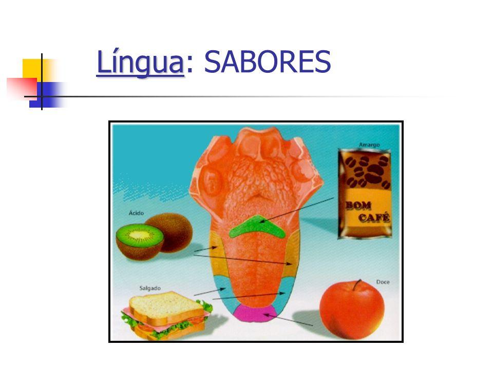 Língua Língua: SABORES
