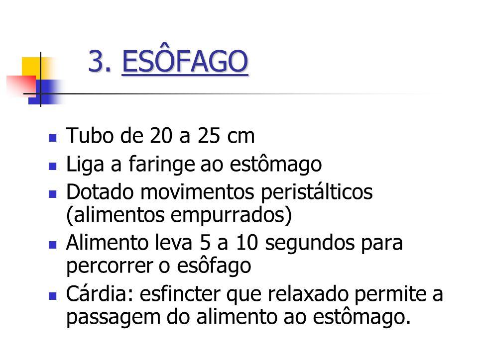 3.ESÔFAGO 3. ESÔFAGO Tubo de 20 a 25 cm Liga a faringe ao estômago Dotado movimentos peristálticos (alimentos empurrados) Alimento leva 5 a 10 segundo
