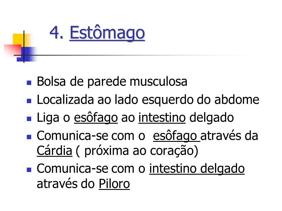4.Estômago 4. Estômago Bolsa de parede musculosa Localizada ao lado esquerdo do abdome Liga o esôfago ao intestino delgado Comunica-se com o esôfago a
