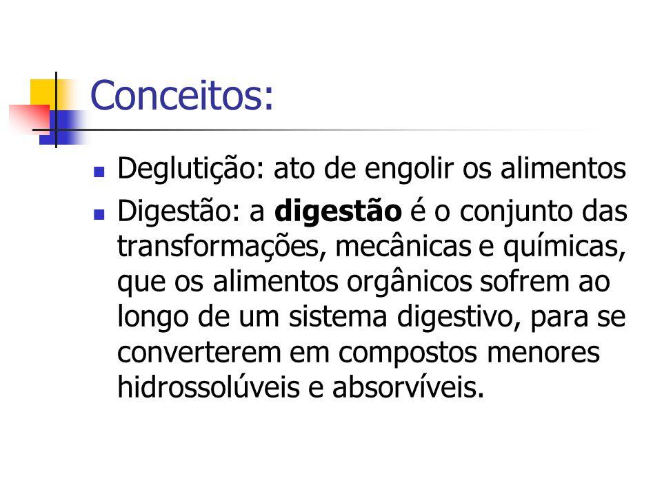 Conceitos: Deglutição: ato de engolir os alimentos Digestão: a digestão é o conjunto das transformações, mecânicas e químicas, que os alimentos orgâni