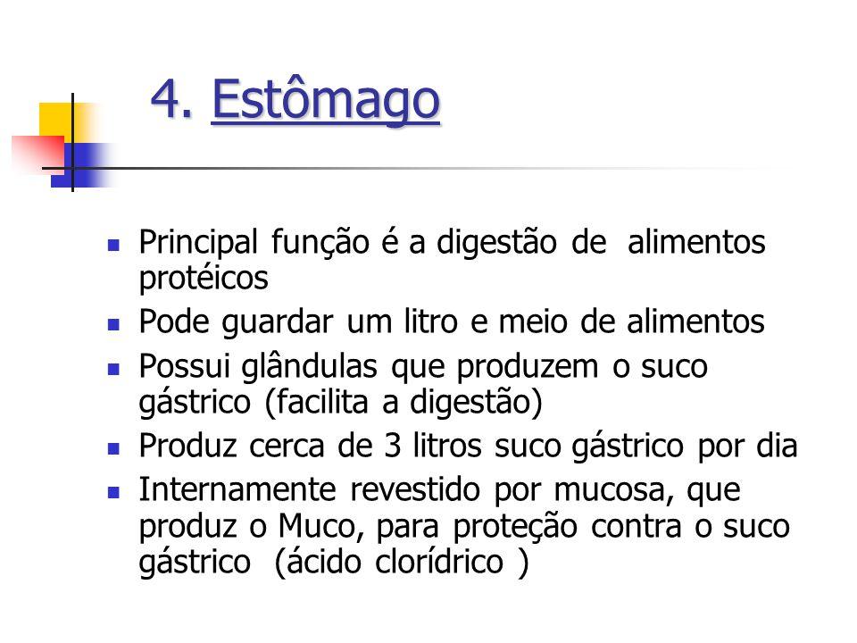 Principal função é a digestão de alimentos protéicos Pode guardar um litro e meio de alimentos Possui glândulas que produzem o suco gástrico (facilita