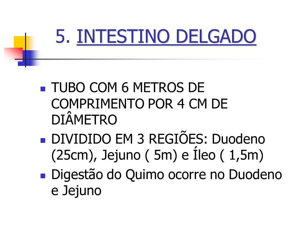 INTESTINO DELGADO 5. INTESTINO DELGADO TUBO COM 6 METROS DE COMPRIMENTO POR 4 CM DE DIÂMETRO DIVIDIDO EM 3 REGIÕES: Duodeno (25cm), Jejuno ( 5m) e Íle