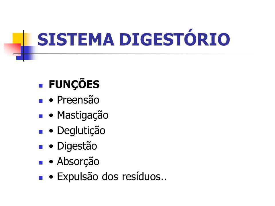 SISTEMA DIGESTÓRIO FUNÇÕES Preensão Mastigação Deglutição Digestão Absorção Expulsão dos resíduos..