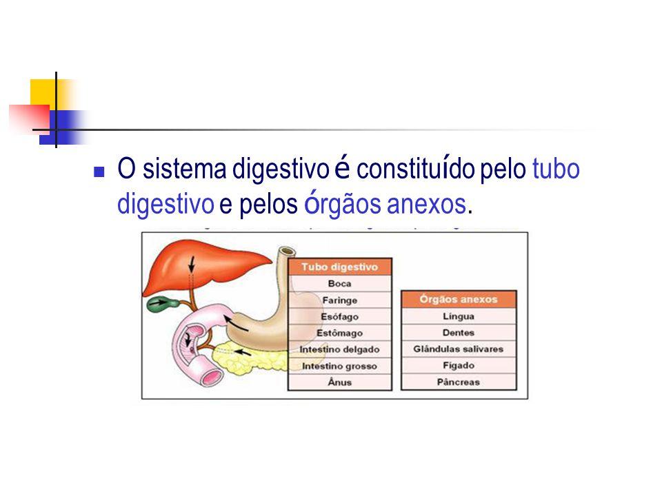 O sistema digestivo é constitu í do pelo tubo digestivo e pelos ó rgãos anexos.