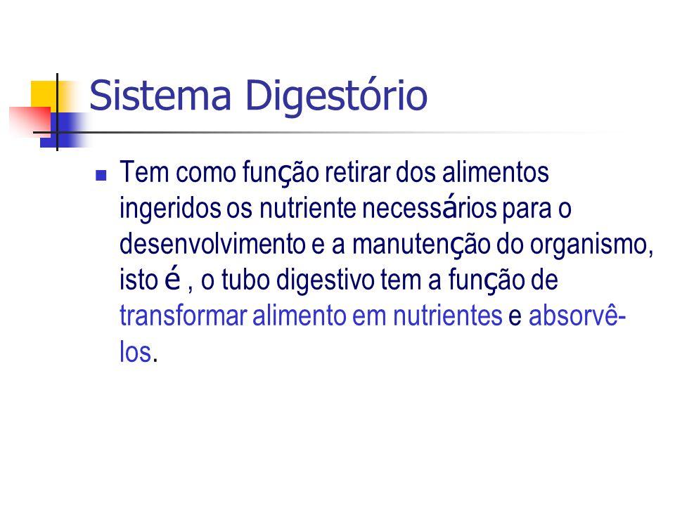 Sistema Digestório Tem como fun ç ão retirar dos alimentos ingeridos os nutriente necess á rios para o desenvolvimento e a manuten ç ão do organismo,