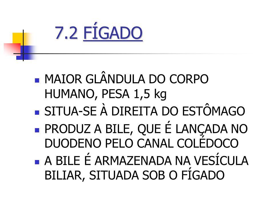 7.2FÍGADO 7.2 FÍGADO MAIOR GLÂNDULA DO CORPO HUMANO, PESA 1,5 kg SITUA-SE À DIREITA DO ESTÔMAGO PRODUZ A BILE, QUE É LANÇADA NO DUODENO PELO CANAL COL