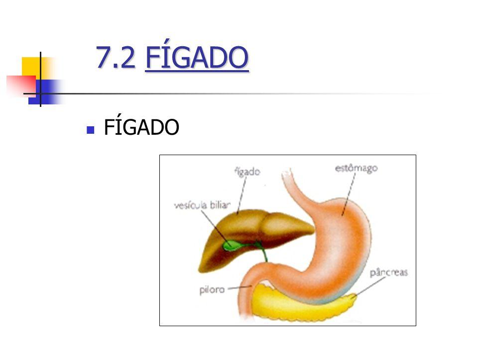 FÍGADO 7.2FÍGADO 7.2 FÍGADO