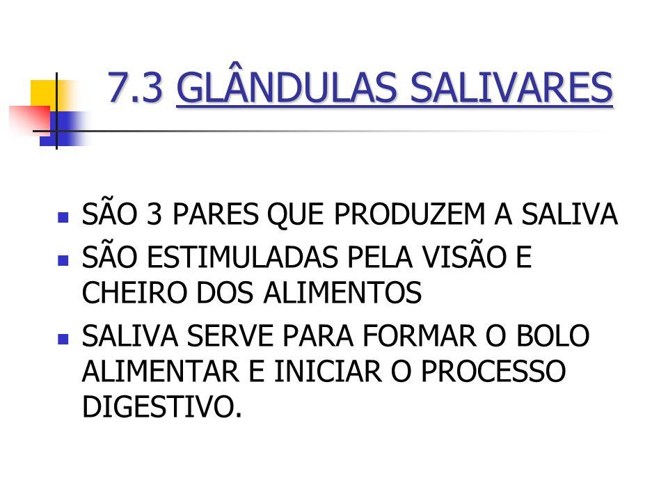 7.3GLÂNDULAS SALIVARES 7.3 GLÂNDULAS SALIVARES SÃO 3 PARES QUE PRODUZEM A SALIVA SÃO ESTIMULADAS PELA VISÃO E CHEIRO DOS ALIMENTOS SALIVA SERVE PARA F