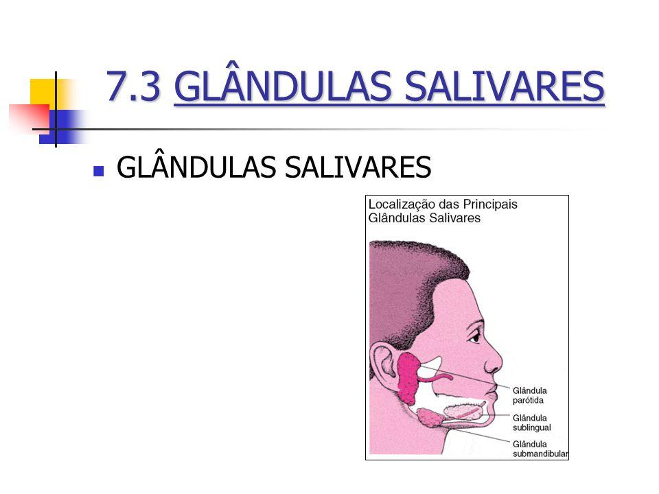 GLÂNDULAS SALIVARES 7.3GLÂNDULAS SALIVARES 7.3 GLÂNDULAS SALIVARES