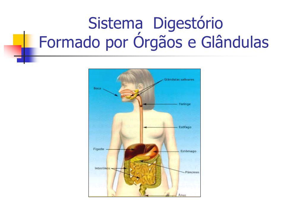 Componentes do Sistema Digestório: Órgãos: Boca Faringe Esôfago Estômago Intestino Delgado=duodeno,jejuno e íleo Intestino Grosso=ceco, cólon ascendente, cólon transverso, cólon descendente, cólon sigmóide e reto