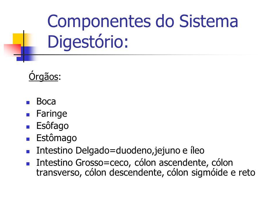 INTESTINO DELGADO 5.
