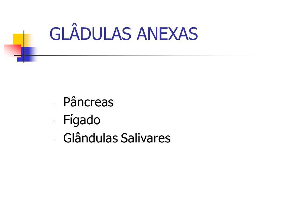 GLÂDULAS ANEXAS - Pâncreas - Fígado - Glândulas Salivares