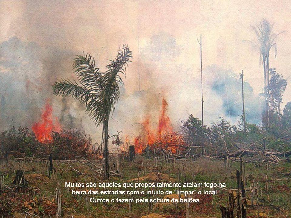 O homem é o maior responsável pelos incêndios florestais mesmo tendo consciência dos prejuízos decorrentes das queimadas.
