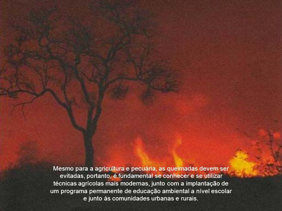 Muitos são aqueles que propositalmente ateiam fogo na beira das estradas com o intuito de limpar o local.