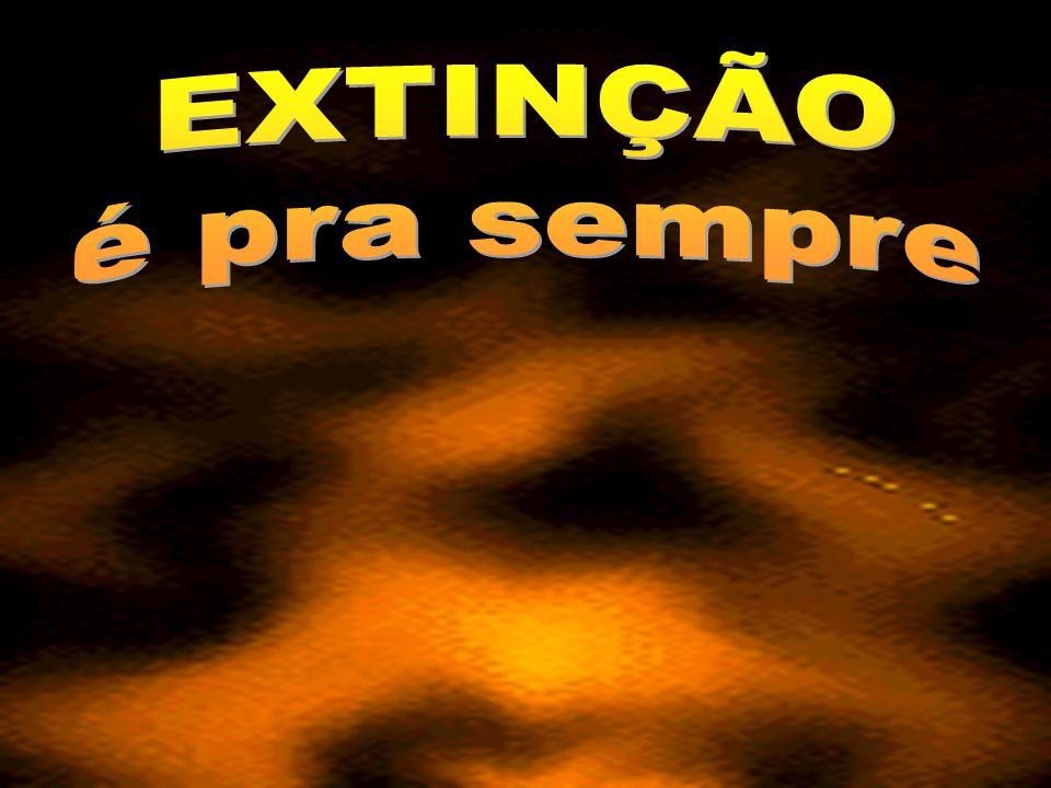V I S I T E www.abcanimal.org.br www.floraisecia.com.br www.greepet.vet.br www.territorioselvagem.org.br www.petfeliz.com.br www.direitoanimal.org www.jornal3milenio.com.br www.apascs.org.br http://danielcaixao.multiply.com http://afamaran.zip.net http://ubbibr.fotolog.com/por_toda_vida www.redetv.com.br/lateshow www.aila.org.br www.institutoninarosa.org.br www.gatoverde.com.br www.clubedaspulgas.com.br www.vegetarianismo.com.br www.falabicho.org.br www.svb.org.br www.suipa.org.br www.projetomucky.com.br www.ranchodosgnomos.org.br www.ibama.gov.br www.arcabrasil.org.br www.pea.org.br www.sosfauna.org www.renctas.org.br www.apasfa.org www.uipa.org.br www.institutoanael.org.br www.veda-bolivia.org Foto: Rildo Silveira