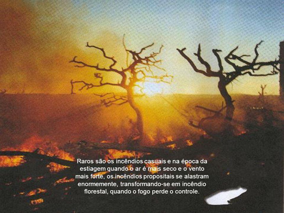 A queima de mato, de vegetação seca ou verde, de floresta ou campo com o fim de preparar o terreno para semear ou plantar, ou mesmo limpá-lo é permitida por lei, desde que sejam feitas de maneira controlada.