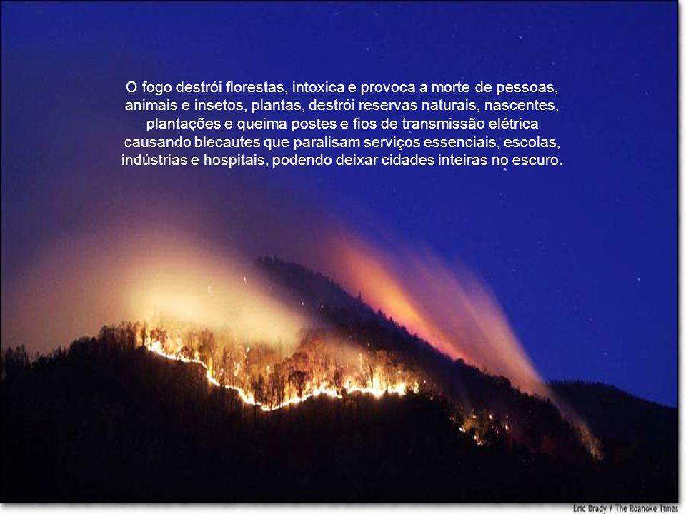As queimadas são também associadas ao desmatamento feitos por agricultores e pecuaristas.