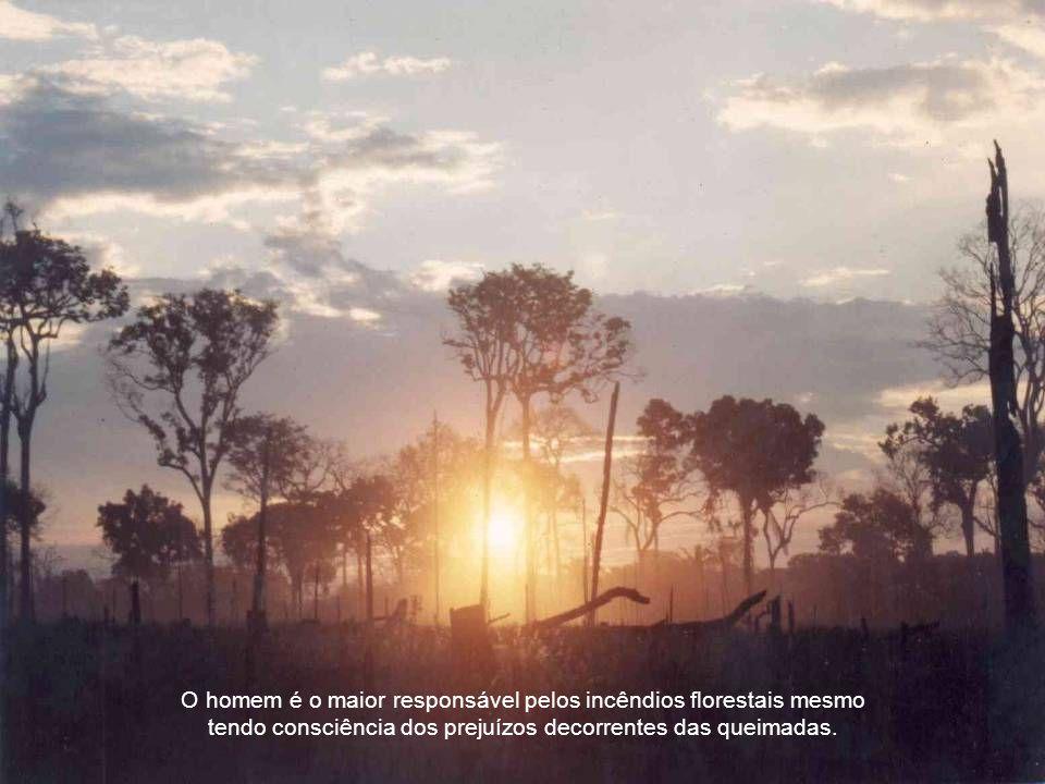 O impacto ambiental além de destruir a biodiversidade e fragilizar os ecossistemas, também compromete os mananciais, enfraquece a fertilidade do solo provocando erosões, assoreamento dos rios e prejuízos à agricultura e pecuária, e emite gases nocivos, contribuindo para o efeito estufa, a má qualidade do ar e tornando perigoso o tráfego aéreo e terrestre.
